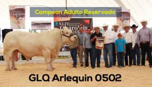 Campeon Adulto Reservado Glq Arlquin 0502