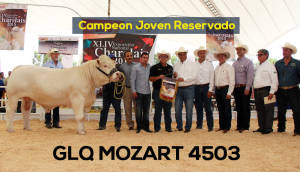 Campeon Joven Reservado Glq Mozart 4503 Copia