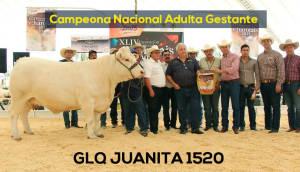 Campeona Nacional Adulta Gestante Glq Juanita 1520 Copia