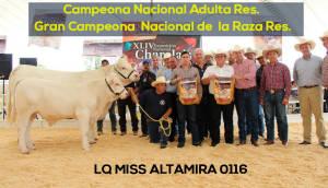 Campeona Nacional Adulta R Y Gran Campeona Lq Miss Altamira 0116 Nacuonal De Raza Reservada Copia