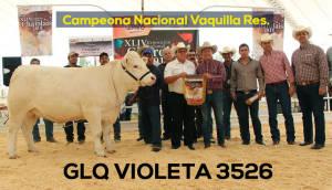 Campeona Nacional Vaquilla Res.. Copia